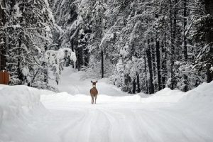 Winters can be really harsh in Montana, so it is better to schedule your move for the spring.