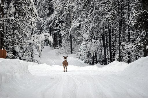 Deer in a snow-covered forest