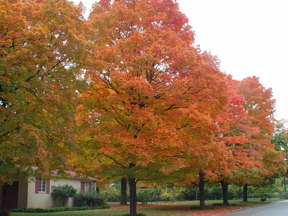 Autumn and spring are the best times to plan your move to Arkansas.