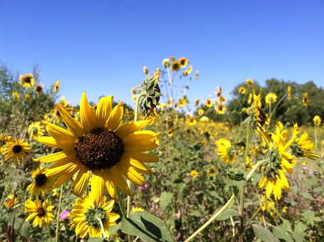 Long distance move to the Sunflower State