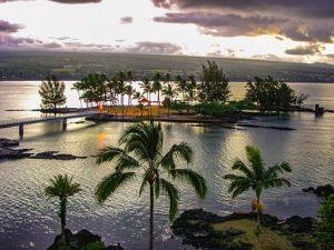 Coconut tress in Hilo, Hawaii