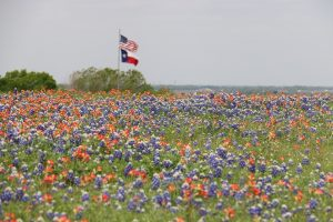 Flower field with the American and Texas state flag in the distance.