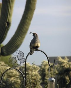 Bird standing on cactus in Tucson, Arizona