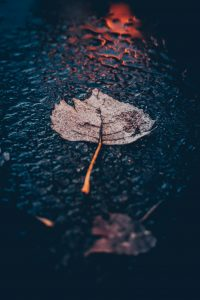 Wet leaf lying on the ground in the rain