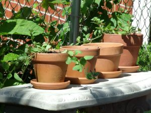 A few plants in clay pots, on a white bench.