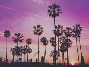 Palm trees and a purple sky.