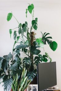 flat-screen TV turned off with plants in background