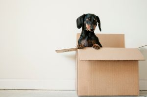 Dog in a box provided by the best long distance moving companies Austin.