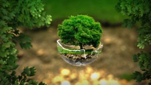 Green moving - a tree in a glass dish