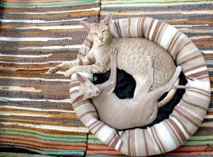 cats enjoying new home