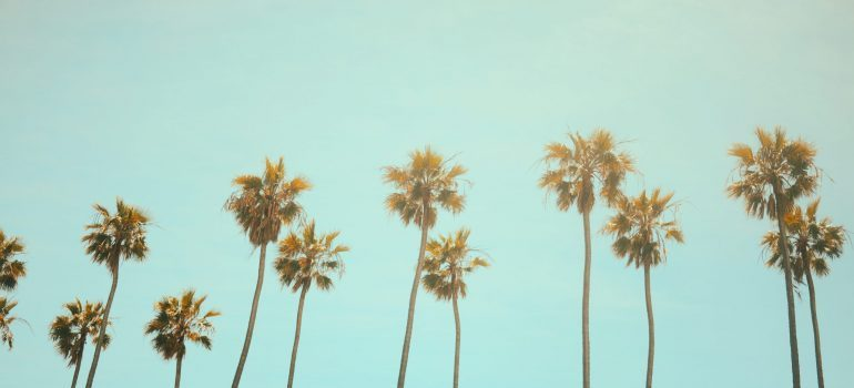 Moving from Mississippi to California- palm threes