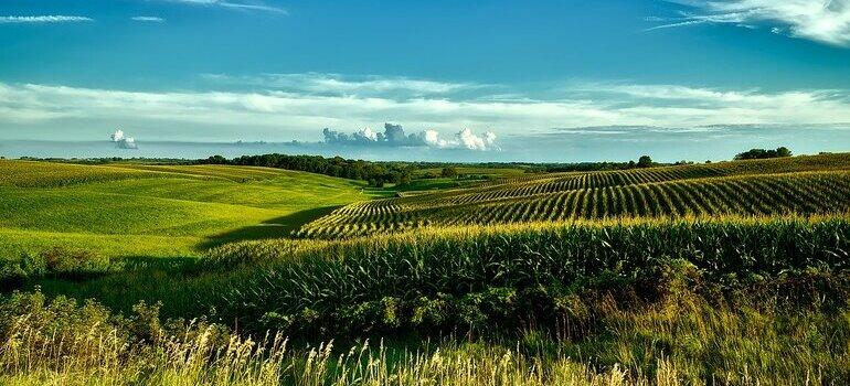 Iowa plains