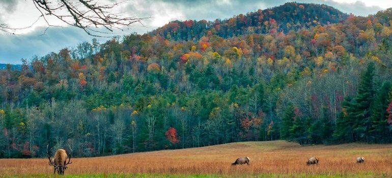 North Carolina forests
