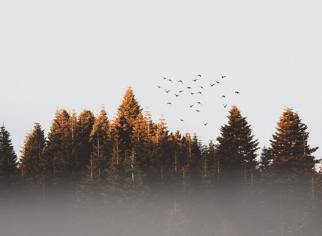 woods and birds