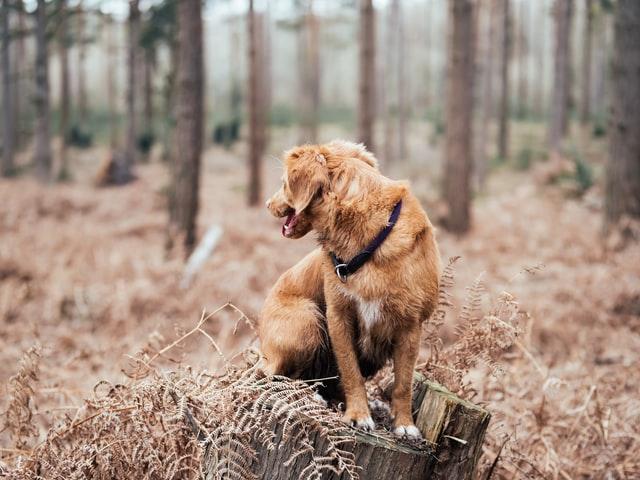 dog sitting on a tree bark