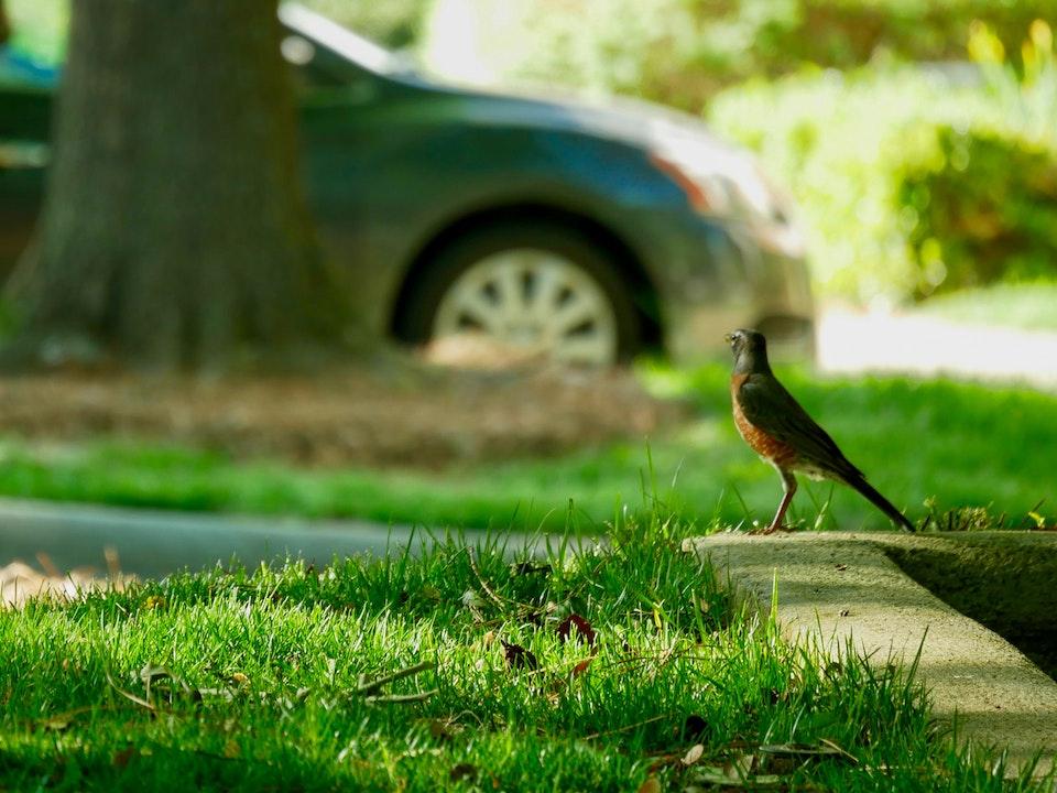 A bird in a park