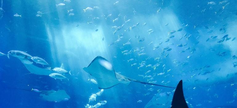 Aquarium with grey fish inside